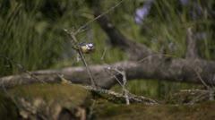 Slow motion wildlife footage (002-12) - stock footage