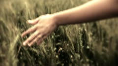Freedom hand green organic agriculture Wheat Harvesting Landscape Crop field Stock Footage