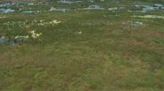 Aerial Everglades Deer Run - stock footage