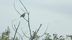Love bird on the tree Stock Footage