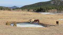 Horses playing in an icy pond #3 Stock Footage