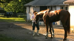 Big Brown Being Washed by Trainer at Stable Stock Video Stock Footage