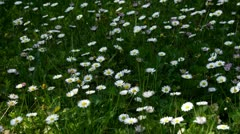 Stock Video Footage of Flowers on meadow with sun and shade moving