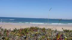 Coastal Landscape windy day Stock Footage