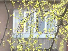Block apartment birch Stock Footage