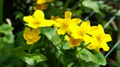 Yellow flowers Stock Footage