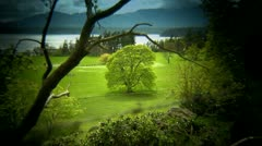 Tree in Green Field, Island Day, Vignette Shot Stock Footage