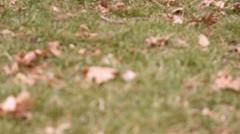 Fall leaves on ground in grass rack focus Stock Footage