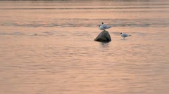 Gull river Stock Footage