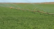 Irrigation Lines Green Grass Stock Footage