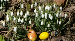 Easter eggs in the snowdrops and spring wind Stock Footage