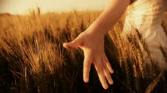 Freedom hand green organic agriculture Wheat Harvesting Landscape Crop field - stock footage