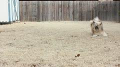 Dog Playfully Barks Stock Footage
