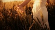 Freedom nice girl walking through golden wheat field  Stock Footage