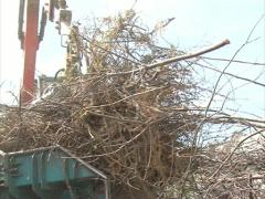 Crane load crush branches Stock Footage