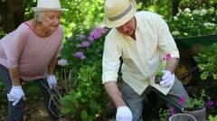 Retired couple gardening together Stock Footage