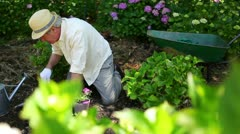 Retired man gardening Stock Footage