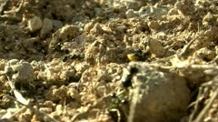 Ants carrying food Stock Footage