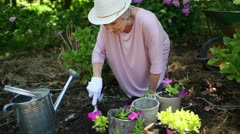 Retired woman planting flowers Stock Footage