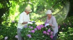 Mature couple pruning shrubs Stock Footage