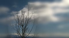 Stark Tree in Spring Branches Blur Clouds - stock footage