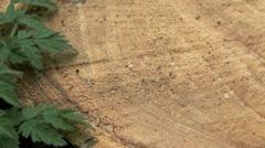 Tree Rings Texture Stock Footage