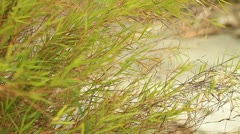 Bamboo leaves. Stock Footage