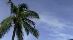 Coconut Tree - stock footage