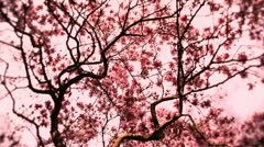 Liriodendron Tulip Tree 12 spring stylized Stock Footage
