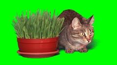 Grey cat near grass Stock Footage