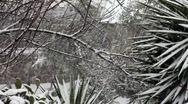 Garden Under The Snowfall Stock Footage