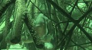 Red Bellied Piranhas in infrared light 2 Stock Footage