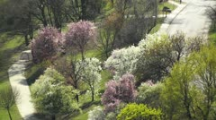 Beautiful Blossoming Springtime Trees - stock footage