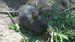 A rabbit eating Stock Footage