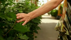 Female hand touching plant leafs, steadicam shot HD Stock Footage
