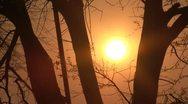 Sunrise through the trees Stock Footage
