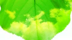 Naturel leaf background 1 Stock Footage