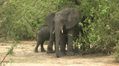 Elephants mother and baby Stock Footage
