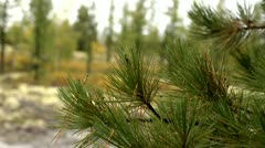 Northern nature Stock Footage