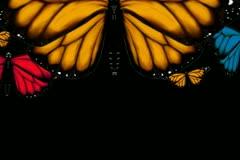 Monarch Butterflies Transition Stock Footage