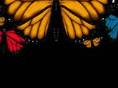 Stock Video Footage of Monarch Butterflies Transition