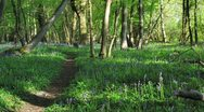 Stock Video Footage of Timelapse of Bluebell Wood, UK