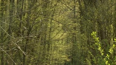 Small River in Germany Stock Footage