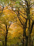autumn golden brown trees - stock photo