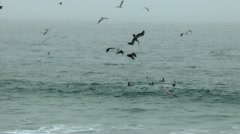 Diving pelicans Stock Footage