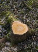 heart shaped felled tree trunk - stock photo