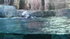 otters2 - stock footage