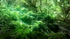 Forest and Water Stock Footage