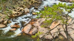 Lone pine tree above river rapids Stock Footage