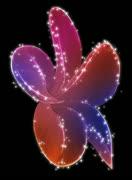 Vibrant Flourish Motion Design Element 04 HD Stock Footage